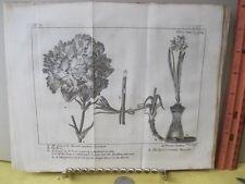 Vintage Print,CARNATION,Spectacle de la Nature,1736,Tree,Plate 7
