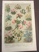 ALPINE PLANTS 1800'S GERMAN CHROMOLITHOGRAPH-FLOWERS-RHODODENDRON-DIANTHUS