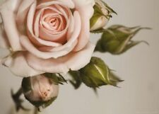 Blumen Größe XXL Fototapeten