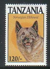 Tanzania Dogs Norwegian Elkhound