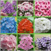 100 PCs Unique 24 Different Colors Us Phlox Bonsai Flowers Seeds Home Garden New