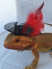 Dragon Wings and Things Adult Bearded Dragon Pirate Hat