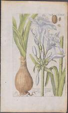 Valentini - Daylily. 173 - 1719 Viridarium Reformatum, seu Regnum...