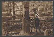 Ca 1932 PPC* Gathering Ooze From Rubber Tree Sumatra Indonesia See Info