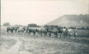 Plough horses WW2 south africa 1943 cape province walsingham pearston