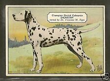 Rare 1938 UK Dog Art / Hand Colored Photo Ardath Cigarette Card Named DALMATIAN