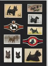 SCOTTISH TERRIER MOUNTED SET VINTAGE DOG COLLECTABLE CARDS AND BANDS