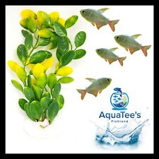 AQUARIUM FISH TANK PLANT DECORATION 15CM NANO ORNAMENT ARTIFICIAL FRESH WATER