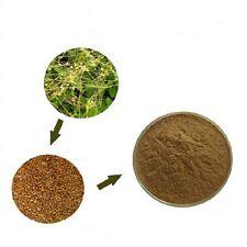 1(OZ)WILD Dodder Seed/Semen Cuscutae /Tu SI ZI 20:1 Extract Powder,Capsules