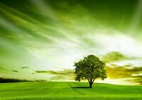 Beautiful Green Field Tree of Hope Poster Size A4 / A3 Nature Poster Gift #8264