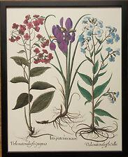 Botanical III by Besler, 20''x16'' frame, rare botanical wall art