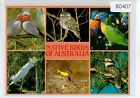B0407ryt Native Birds of Australia Multiview postcard