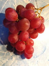 10 Big Red Grape Seeds FRESH TABLE GRAPES