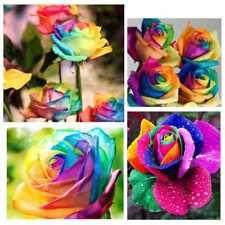 200Pcs/Bag Mehrfarben Regenbogen Rosen Blumensamen  Garden Easy Grow Pflanze