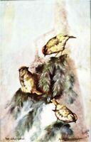 The Gold Crest Raphael Tuck & Sons postcard antique British Birds Oilette