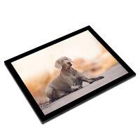 A3 Glass Frame - Large Weimaraner Dog Puppy Art Gift #16229