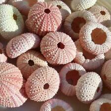 4 Pieces Natural Sea Urchin Shells Delicate Durable Pineapple Shells Plants G7Q3