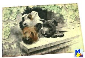"""Akzente Gallery Matte """"Terrier Hunde"""" Vlies bedruckt 44x67 cm waschbar NEU"""