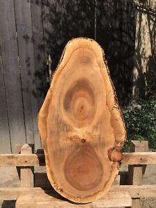 Baumscheibe Kirsche Trocken XXL 58/32/7cm Holzscheibe Couchtisch Tischplatte