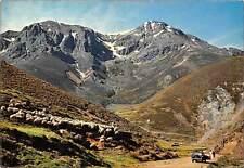 Spain Picos de Europa, Puerto de San Glorio Carretera de Potes a Riano Sheeps