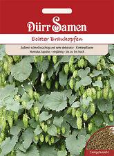 Dürr  Echter Brauhopfen Kletterpflanze bis 5 m hoch sehr dekorativ 4138