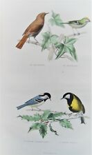 1d-39 Gravure 19e oiseaux rossignol, roitelet, charbonnière, mésange Buffon 1853