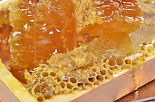 Wild Mountain Honey Type Soap / Candle Making Fragrance Oil 1-16 Ounce