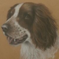 Original Springer Spaniel Dog Pastel Painting Study By P.J. Rowles Chapman
