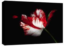 Grande tela Floreale Arte FOTO ROSSO BIANCO NERO NUOVO A1