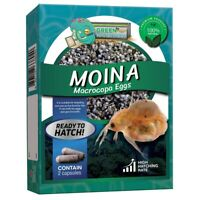 Moina Macrocopa Eggs (Water Flea) Live Fish Food for Hatching and Culture