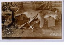 Real Photo Postcard RPPC - Hunting Mountain Lion - Rifle Knife