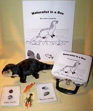 River Otter Naturalist Box Montessori lunch box educational toy homeschool