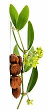 Jojoba Oil, 100% all natural, Colorless, Odorless, best quality, 40 lb pail