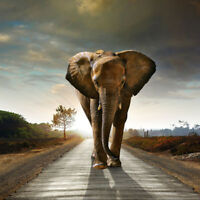 FJ- GN- ELEPHANT PATTERN 5D DIAMOND EMBROIDERY PAINTING OFFICE ROOM WALL DECOR F