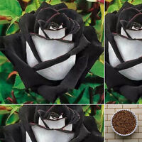200Pcs White + Black Rose Flower Plant Seeds Garden Rare Seeds Home Garden