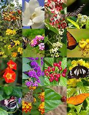 Butterfly Garden Mix attract Butterflies wild flower garden plant seed 100 seeds