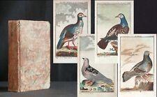 BUFFON Vögel DAS TAUBENGESCHLECHT Tauben 1788 61 kolorierte Kupfer Pigeons