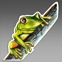 car bumper sticker Australian green tree frog on branch big eyed  94 x 98.5mm