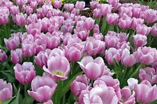 Flowers Garden Forest Nature Landscape HD POSTER