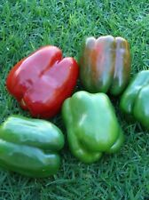 California Wonder Pepper Seeds- Heirloom 75+ 2019 Seeds    $1.69 Max Shipping