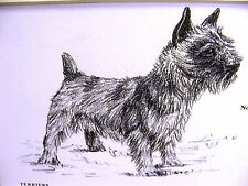 Gladys Emerson Cook 1962 Norwich Terrier Vintage Dog Art Print Matted