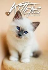 Gattini Kittens Calendario da parete 2019 Byblos