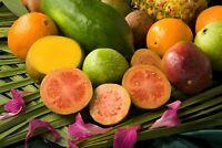 Samen Gartenpflanze Balkon exotisch i! APFEL-GUAVE !i Obst winterhart Saatgut