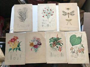 7 gravure  XIXè mme fleurs plantes botanique insectes FOLIAU FOURNIER