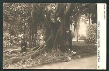 Palermo : Giardino Garibaldi, Ficus - non viaggiata , indicativamente primi '900