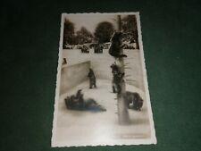 ancienne carte postale - animalier - les ours