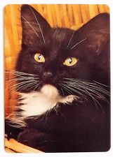 SWAP CARD. BLACK & WHITE SHORT HAIR KITTEN / CAT. GORGEOUS. MODERN. WIDE. MINT