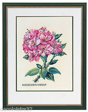 Eva Rosenstand  12-895  Rhododendron  Kit  Point  Compté