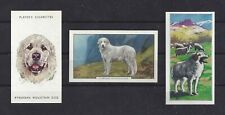 1938 - 1970 Uk Art Head Body Cigarette Card Great Pyrenees Pyrenean Mountain Dog