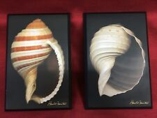 2 Harold Feinstein Signature Collection Seashells Picture Plaque Wall Hanging